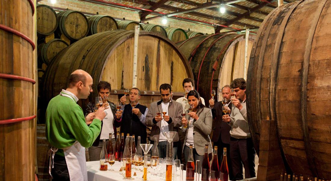 Ruta del Vino Castilla La Mancha - Servicios en Tomelloso - Sabertour
